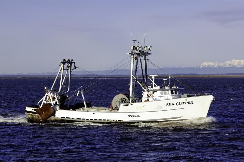 Image of SEA CLIPPER