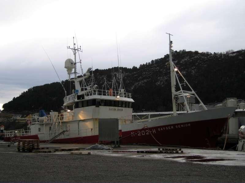 Image of DELFIN