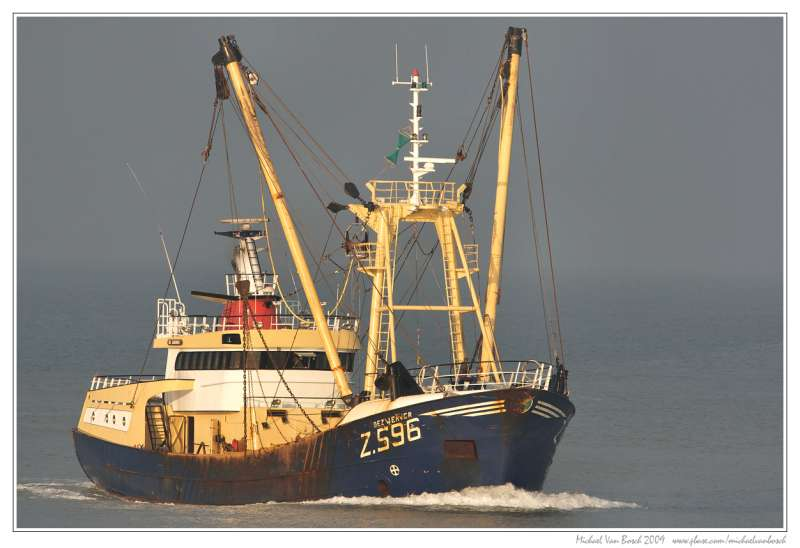 Image of Z115 ANTJE DE VRIES