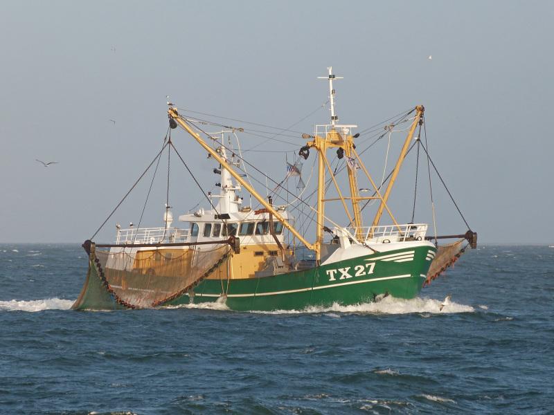 Image of TX33 NOVA SPES