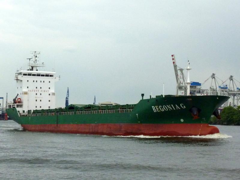 Image of BEGONIA S