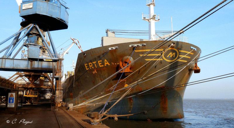 Image of ERTEA