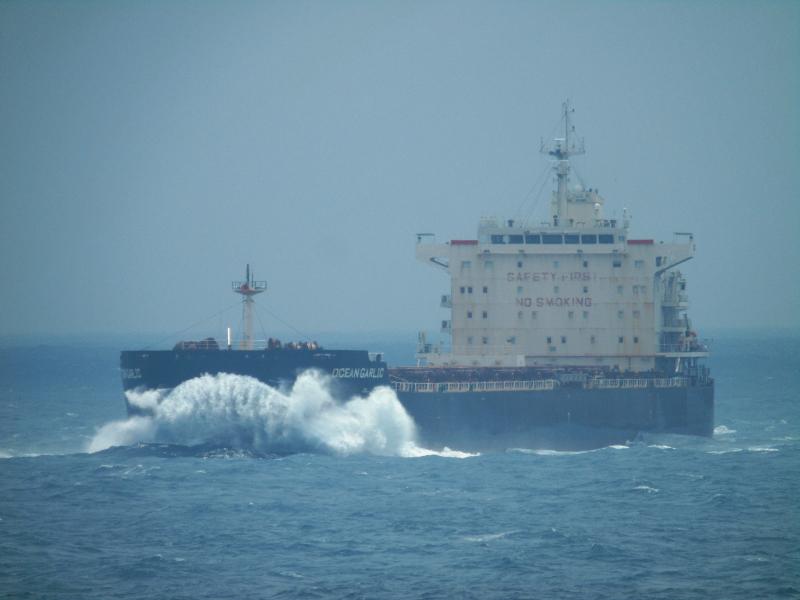 Image of OCEAN GARLIC